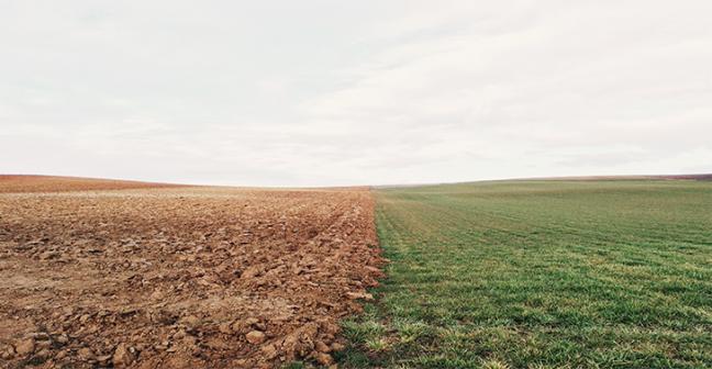 Photo of land, half is muddy soil, half is fresh healthy grass.